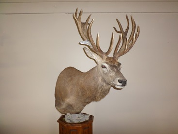 Red Stag Floor Pedestal Mount
