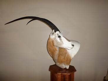 Scimitar Horned Oryx Floor Pedestal Mount