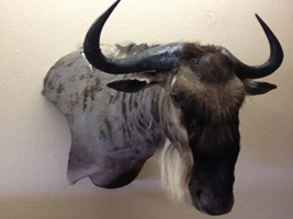 White Bearded Wildebeest Pedestal Mount